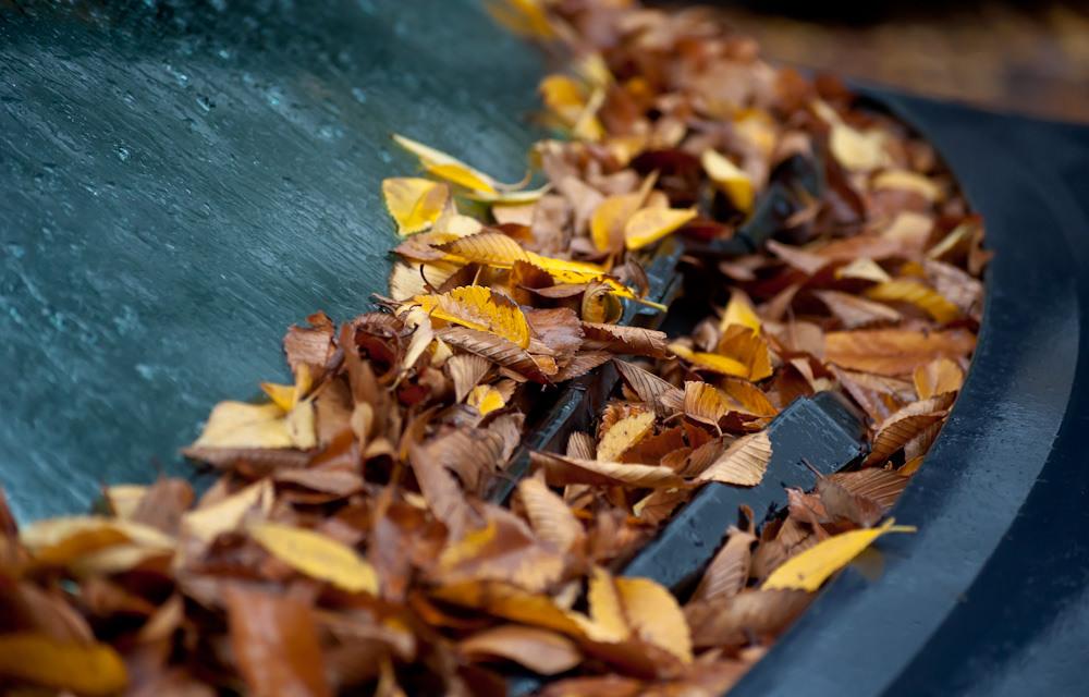 car-windshield-leaves